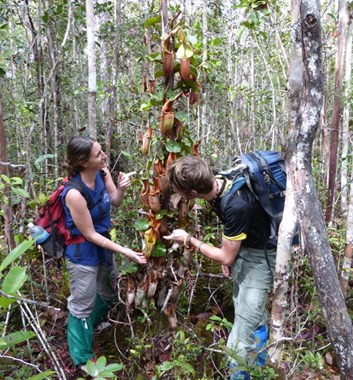 Adventure Alternative Borneo Sabah Pitcher plants