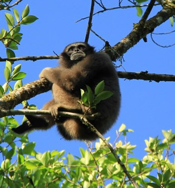 Adventure Alternative Borneo Sabah Jungle Wildlife Monkey