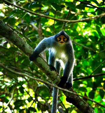 Adventure Alternative Borneo Sabah Maliau Basin Wildlife Monkey