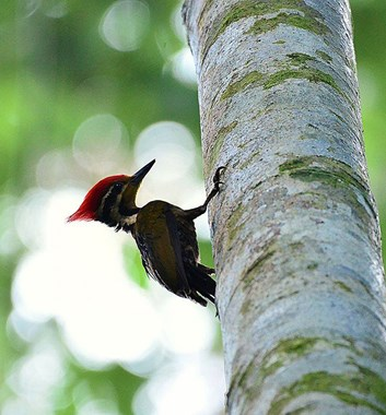 Adventure Alternative Borneo Sabah Maliau Basin Wildlife Bird